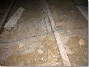 termites in roof