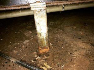 conducive termite conditions
