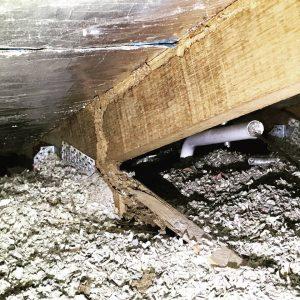 termite damage near insulation
