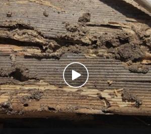 Termites Love Loose Timber - bpic.com.au